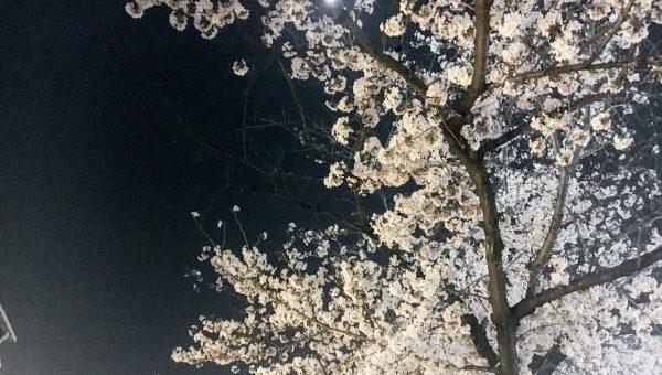 夜桜in鶴舞公園