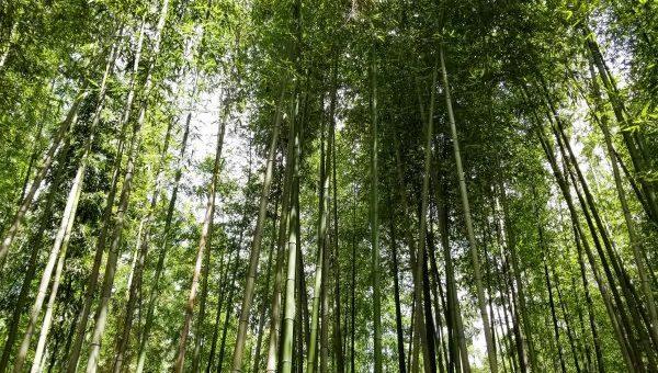 京都旅行!!嵐山散策♪