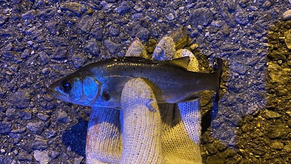 最近の釣り事情