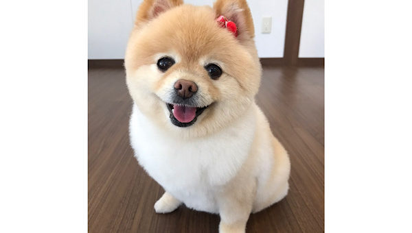 最近のうちの犬